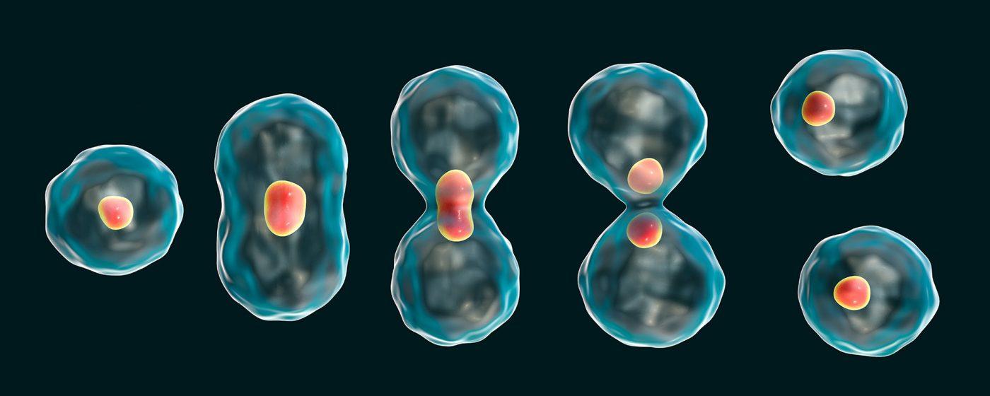 kök hücre tedavisi